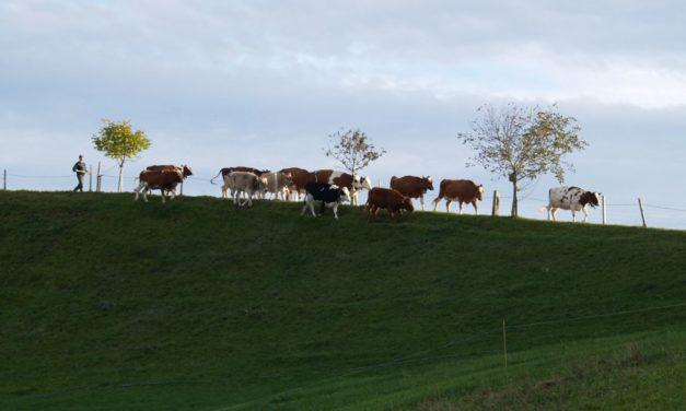 Zukunftsfähige Visionen für die Landwirtschaft