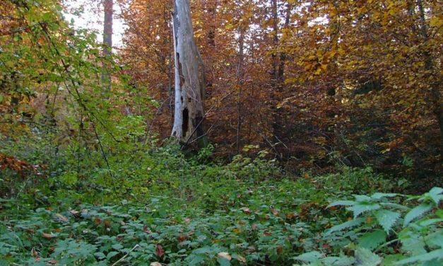 Biodiversität ist für die Gesundheit wichtiger als bisher gedacht