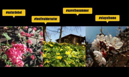 #naturdehei – Biodiversität zuhause entdecken