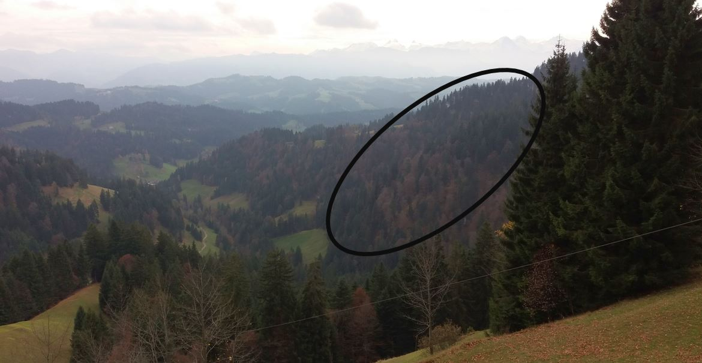 Neues Waldreservat im Napfbergland (Trub)