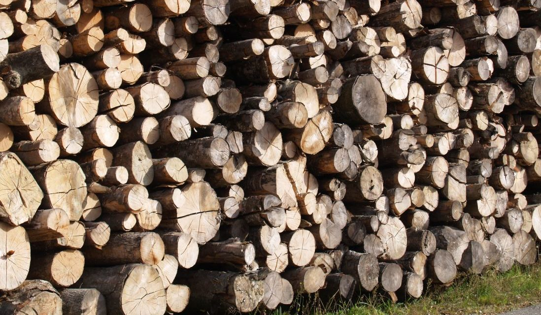 Projektstart: Regionale Wertschöpfung Wald und Holz (Emmental)