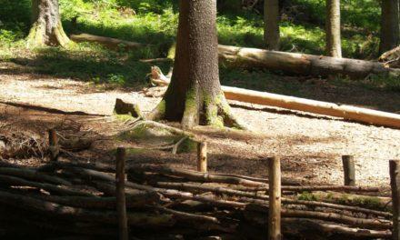 Neue Informations-Plattform «Freizeit und Erholung im Wald»