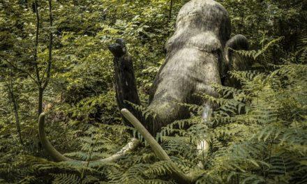 Projekt Mammutland Huttwil gestoppt