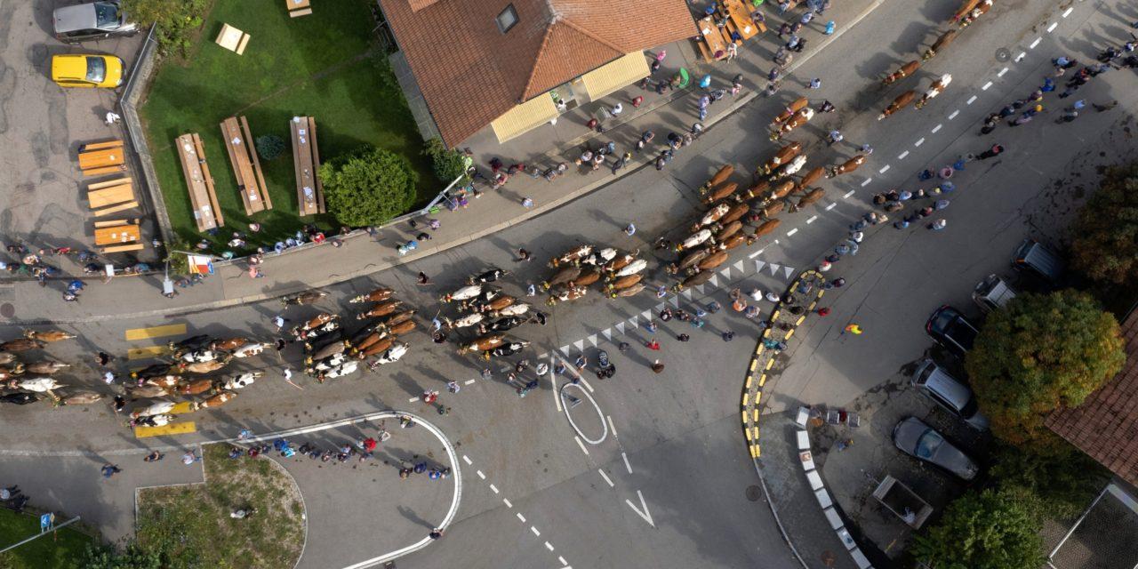 Emmentaler Alpabfahrt Wasen-Sumiswald 2021 – Aerial Panoramabild