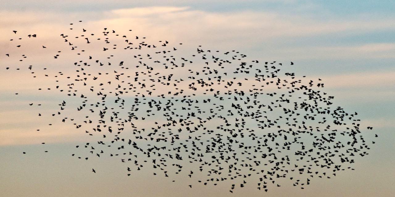 Ein Weltwunder live beobachten: Zugvogeltage 2./3. Oktober 2021